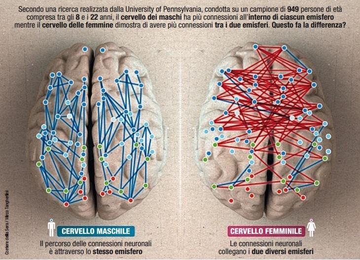 Risultati immagini per cervello maschile cervello femminile