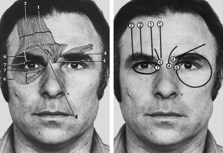 comunicazione non verbale facciale facial action coding system