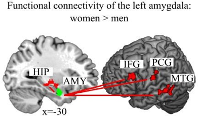 amigdala stress depressione