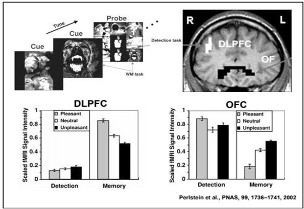 corteccia prefrontale dorsolaterale