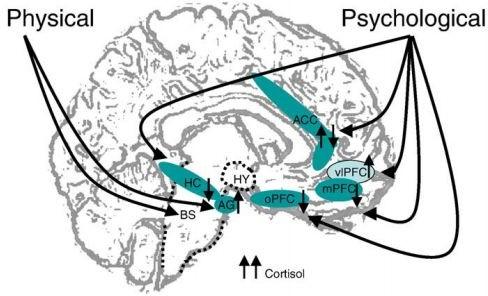 cortisolo depressione