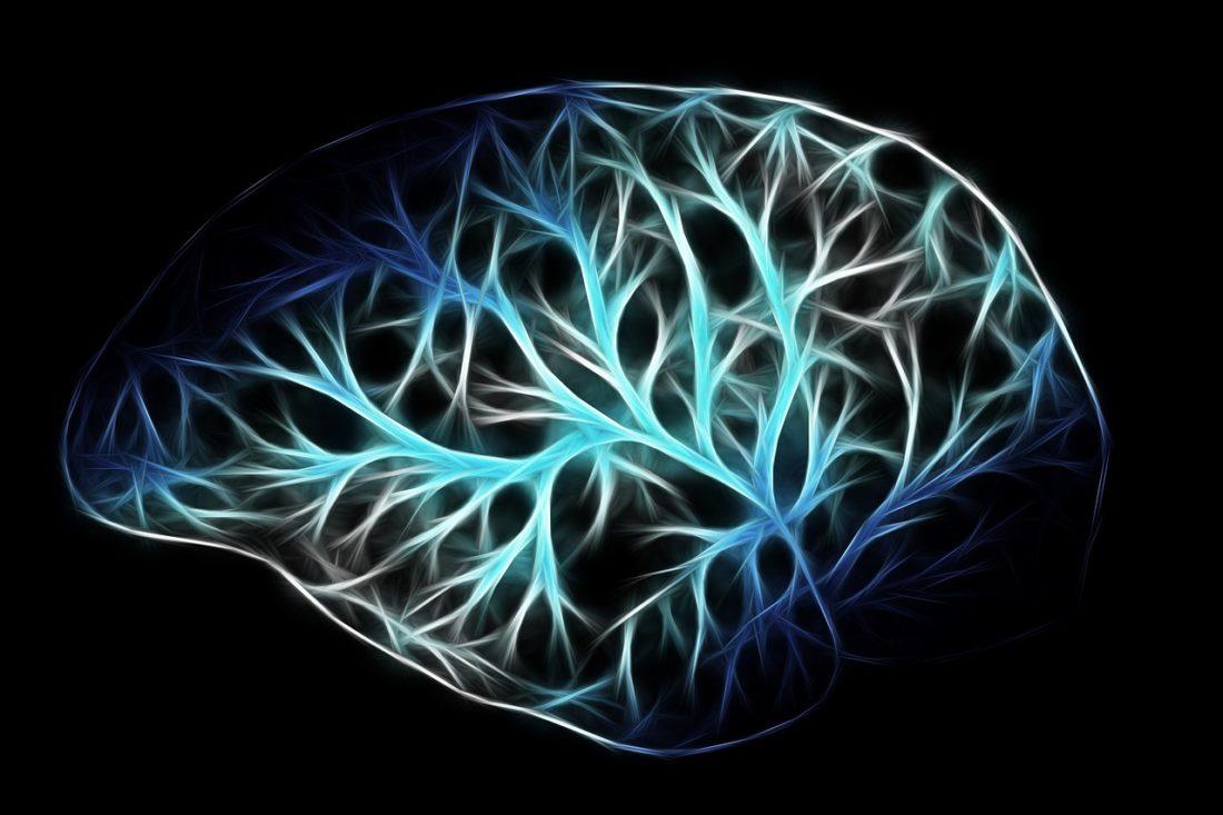 cervello sistema immunitario